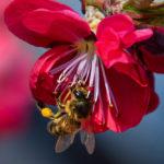 Bij Bee