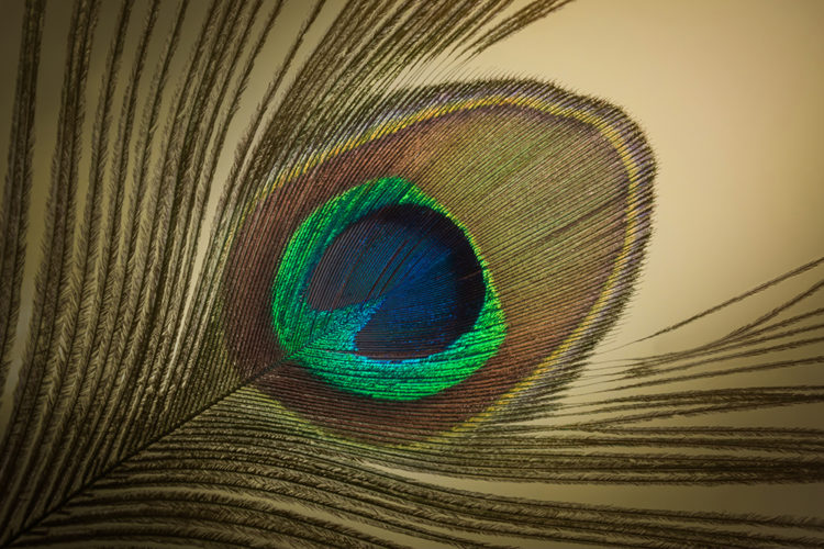 Pauwenveer