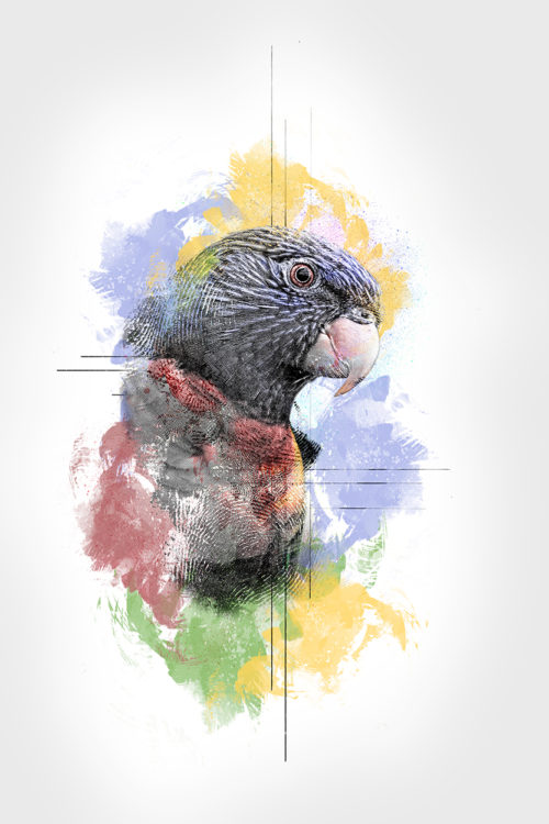 Abstract impressions: Regenbooglori