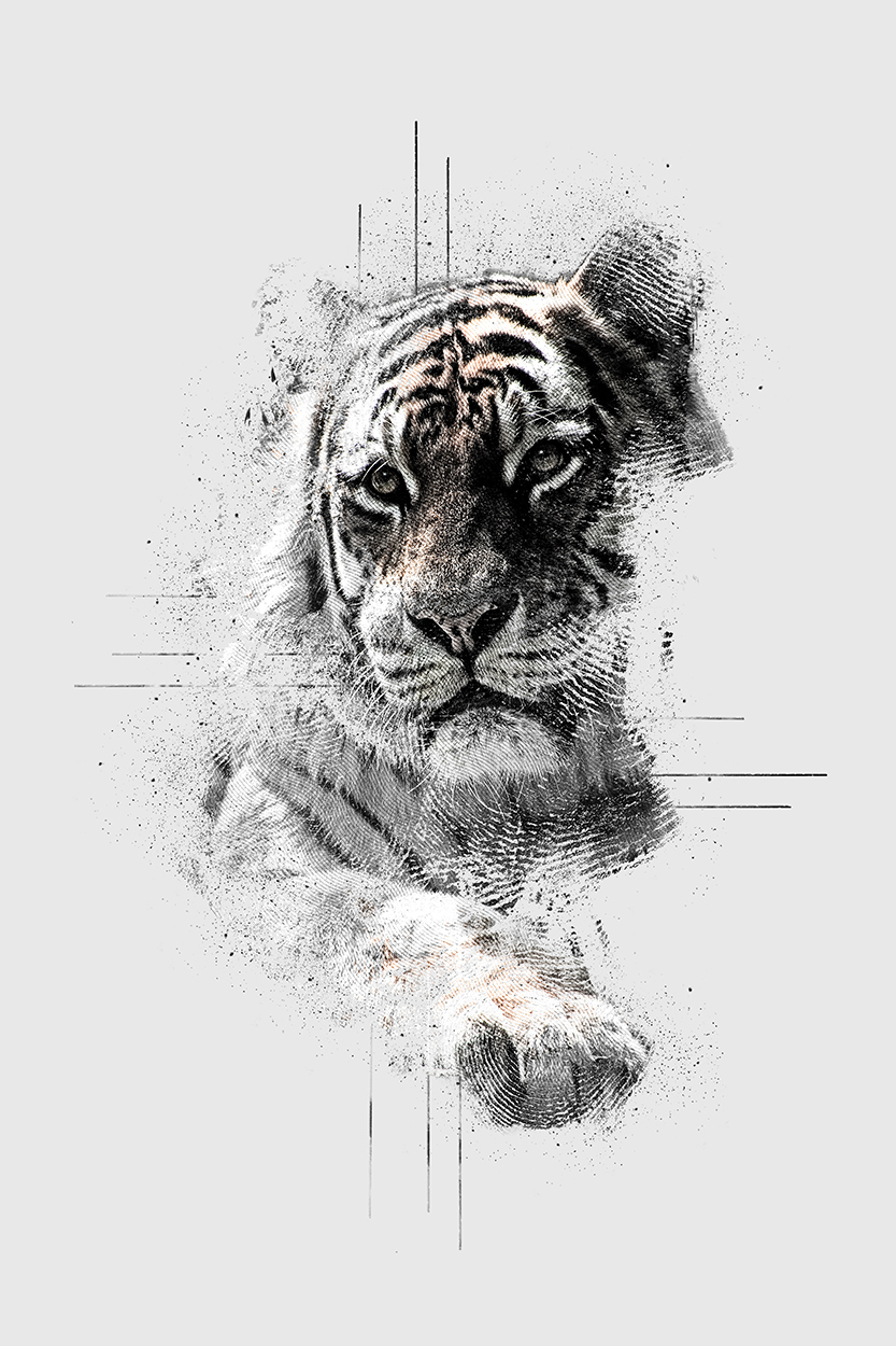 Abstract impressions: Tiger