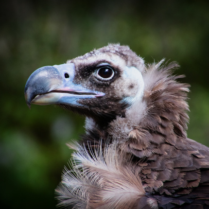 Kromme snavels in Allwetter Zoo