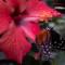 Vlinders in de Orchichideeën Hoeve