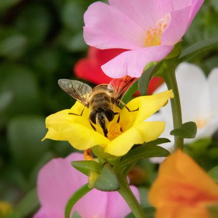 Beestjes bij Groenrijk