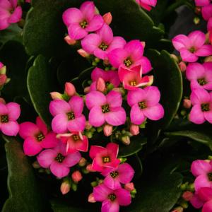 Bloemen bij Groenrijk