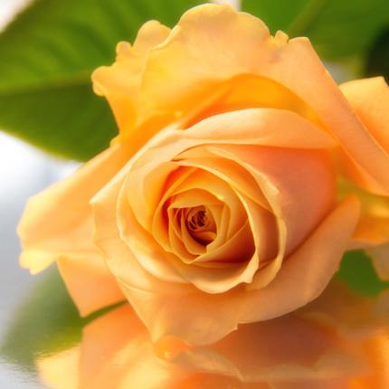 Ik geef je een roosje mij …