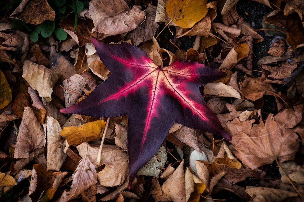 Herfstbladeren - Autumn leaves