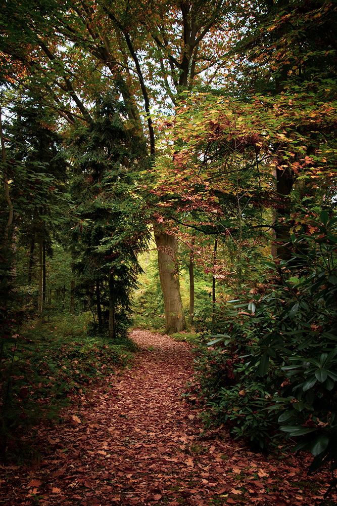 Bospad - Forest path