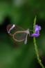 Bugs & butterflies