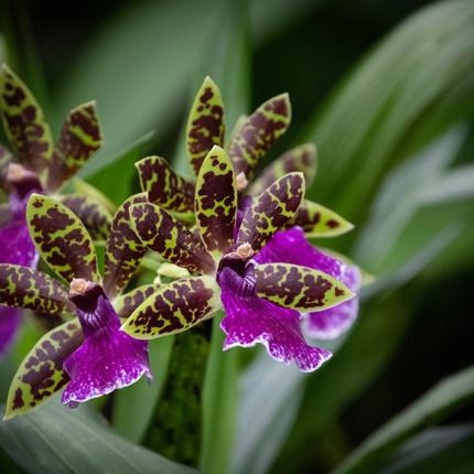 Orchideeën bij de Orchideeën Hoeve