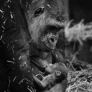 Monochrome monkey babies