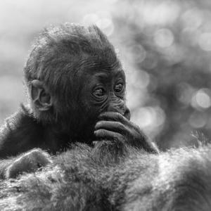 Monochrome apen baby's