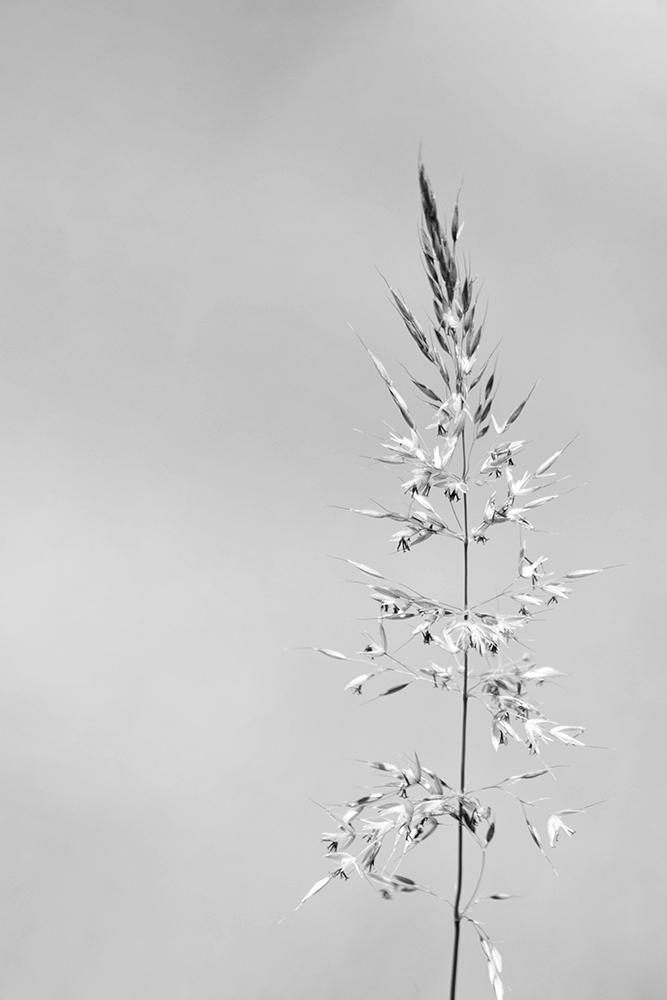 Gras - Grass