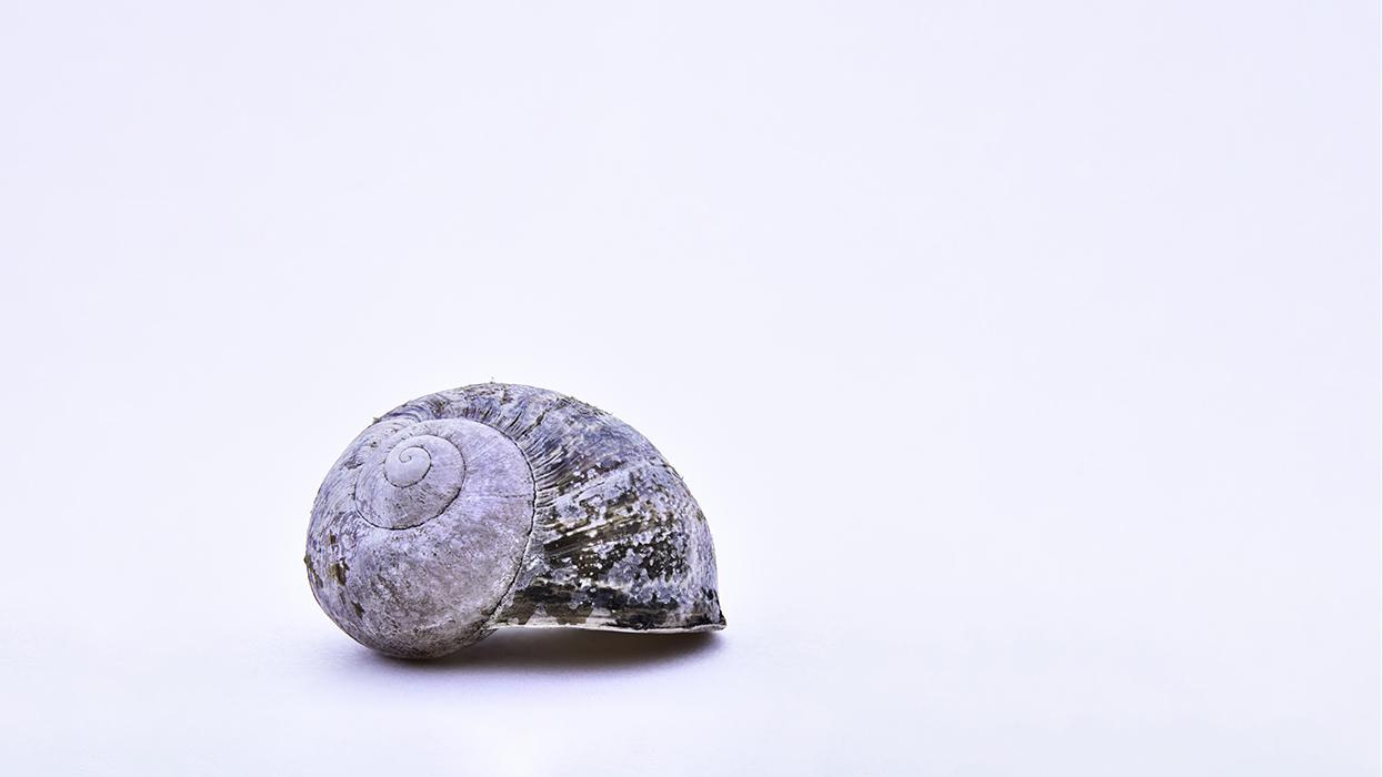 Slakkenhuis - Cochlea