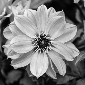Monochrome bloemen