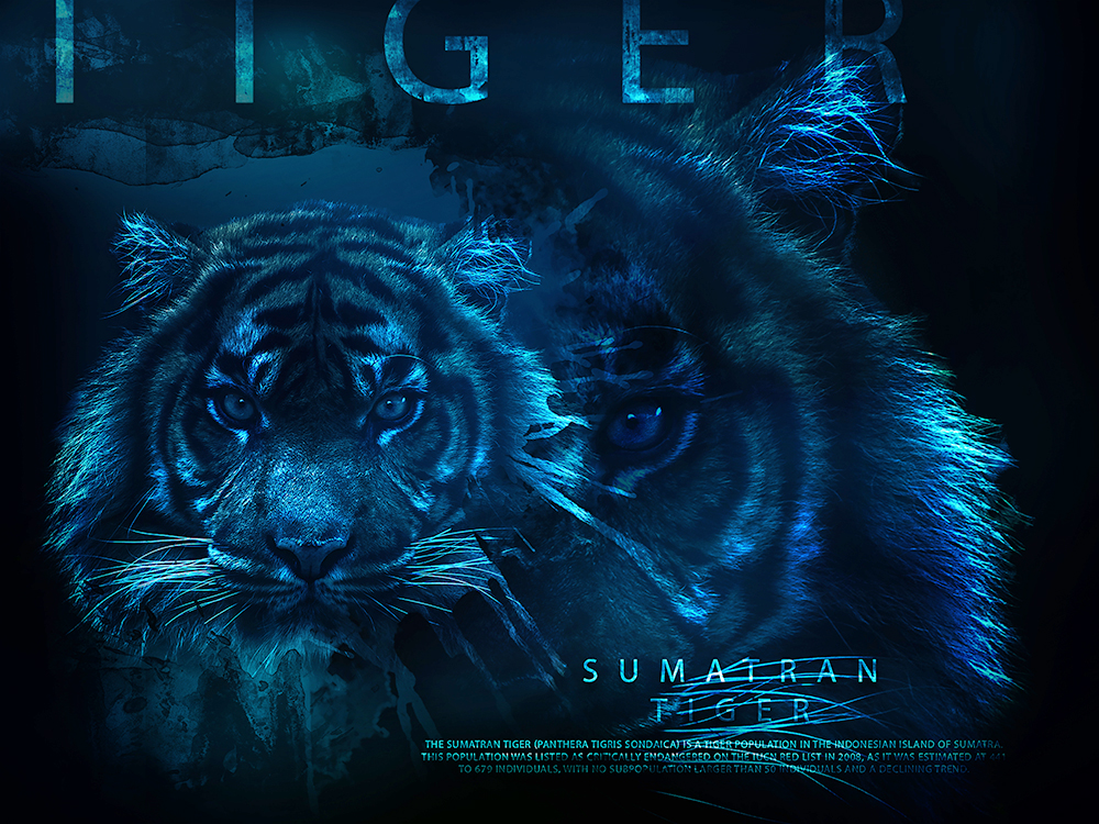 Sumatraanse tijger - Sumatran tiger (Artistic Photo Template V2)