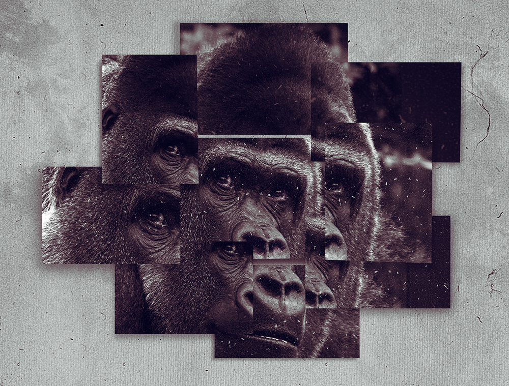Gorilla Bauwi (Frame Art Photo Template - Landscape)