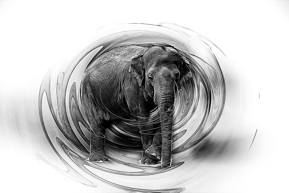 Aziatische olifant - Asian elephant (Planckendael Mechelen)