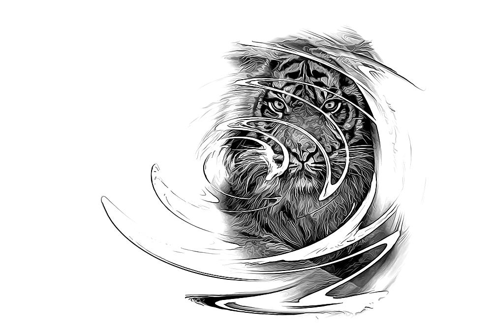 Sumatraanse Tijger - Sumatran tiger (Burgers Zoo Arnhem)