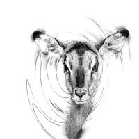 Impala (Noorderdierenpark Emmen)