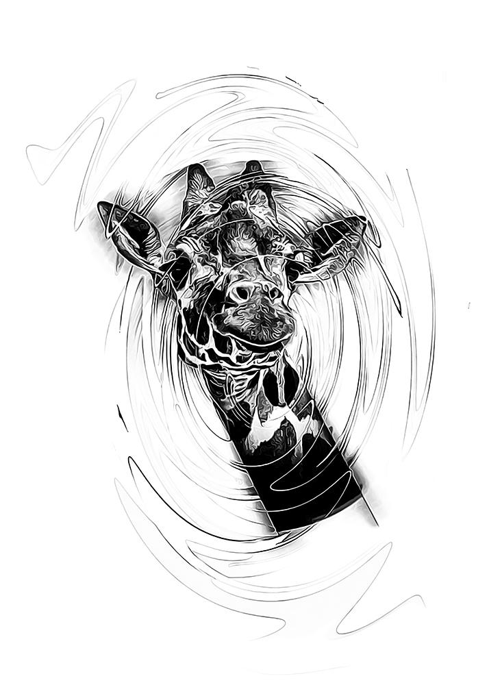 Netgiraffe - Reticulated giraffe (Artis Amsterdam)