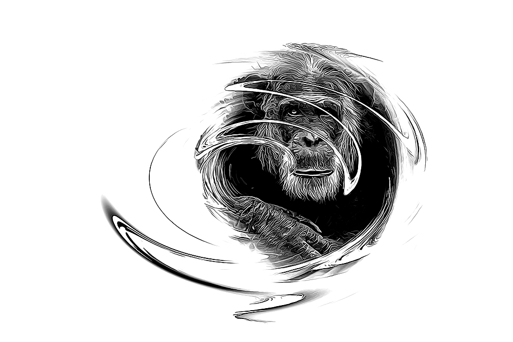 Mike - Chimpansee - Chimpanzee (Dierenpark Amersfoort)