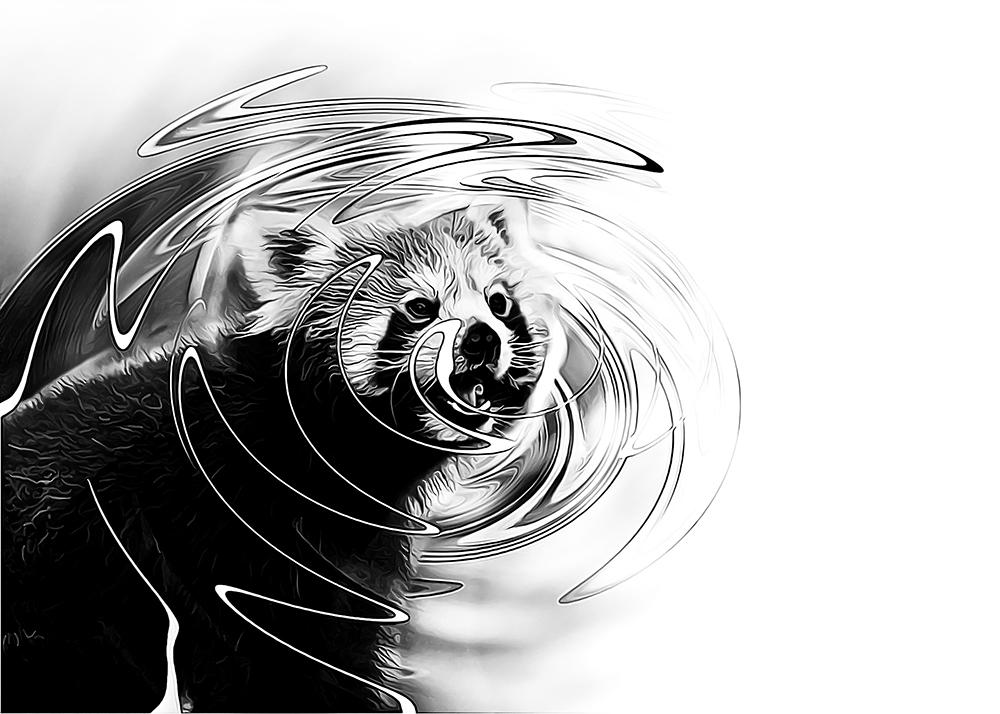 Rode panda - Red panda (ZOOM Erlebniswelt Gelsenkirchen)
