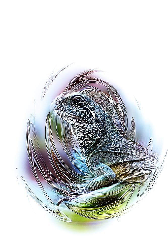 Groene wateragame -Chinese water dragon (Artis Amsterdam)