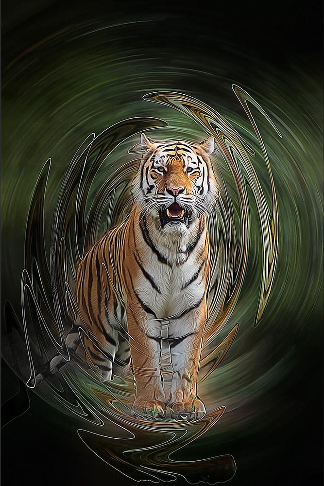 Siberische tijger – Siberian tiger (Allwetterzoo Münster)