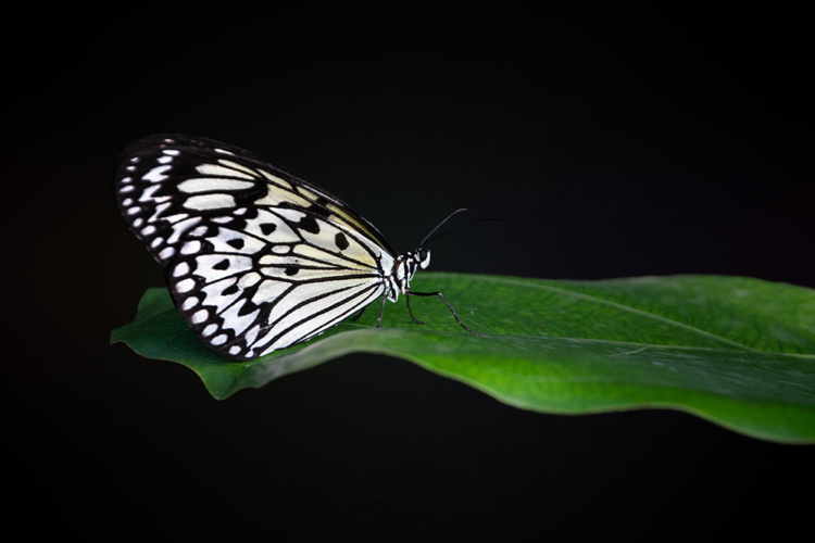 Vlinders een beetje anders