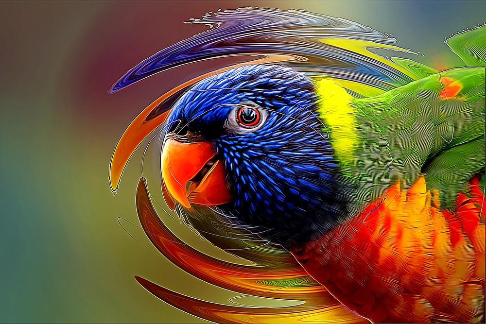 Regenboog lori - Rainbow lorikeet (Orchideeën Hoeve)