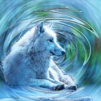 Hudson Bay wolf (Artis Amsterdam)