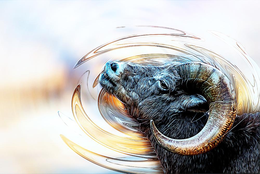 Dikhoornschaap - Bighorn sheep (Burgers Zoo Arnehem)