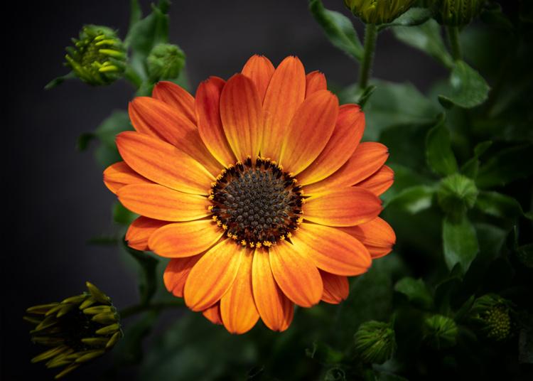 Flowers at Groenrijk