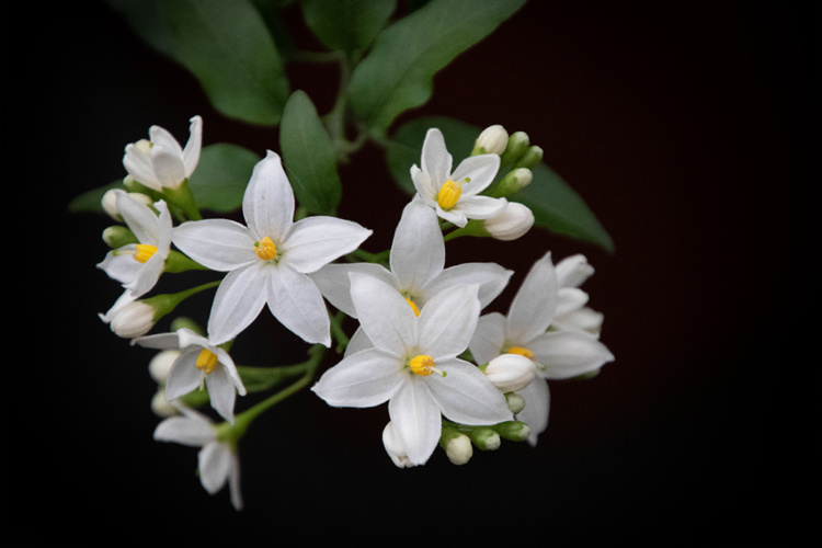 More flowers at Groenrijk