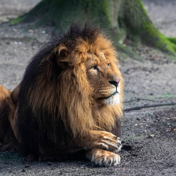 The king of Burgers Zoo