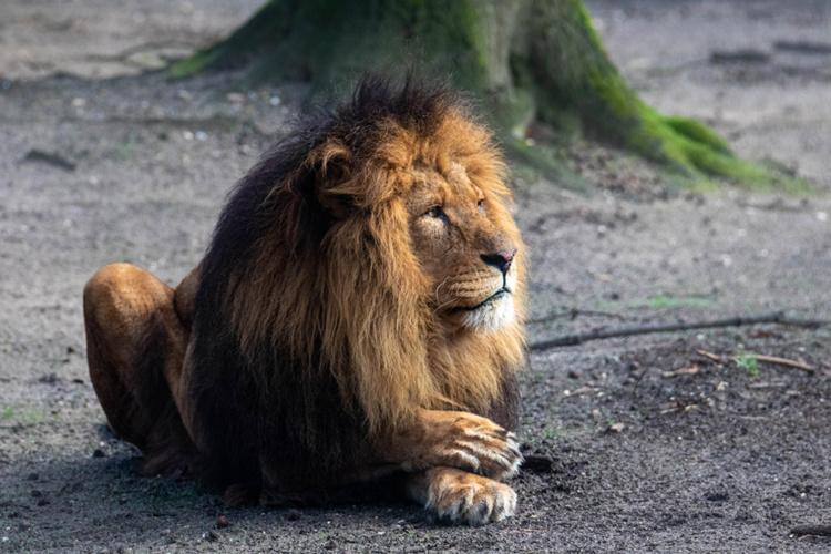 De koning van Burgers Zoo