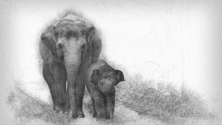 Asian elephant with baby