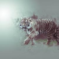 Tijger - Tiger - Digital sketch Photoshop action