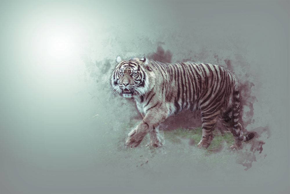 Tijger - Tiger - Digital sketch Photoshop action