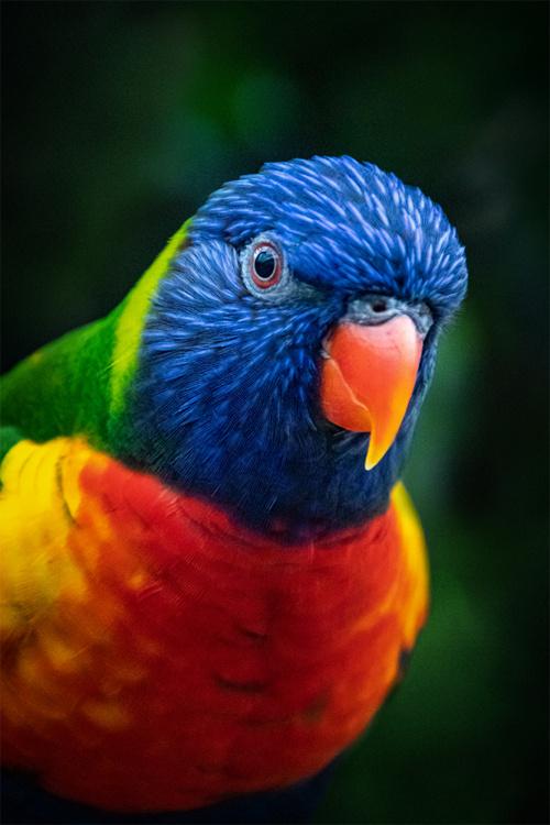 Feathered photos