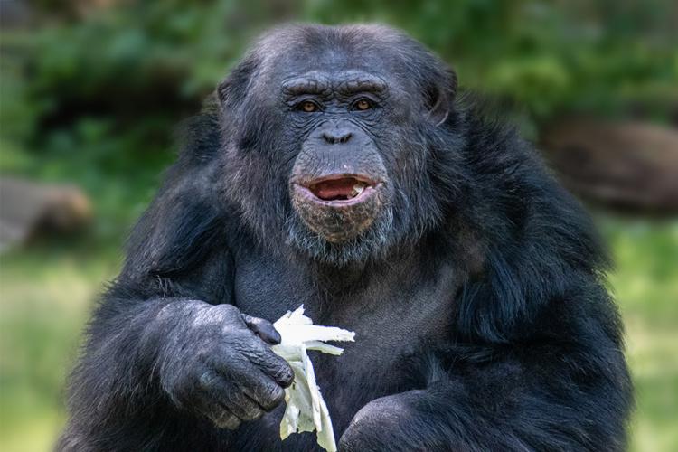 Bijzondere gezichten in Burgers Zoo