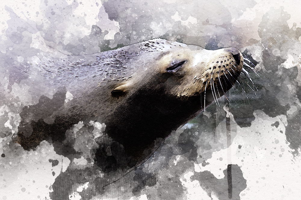 Zeeleeuw - Sea lion (Zoom Erlebniswelt 2016)