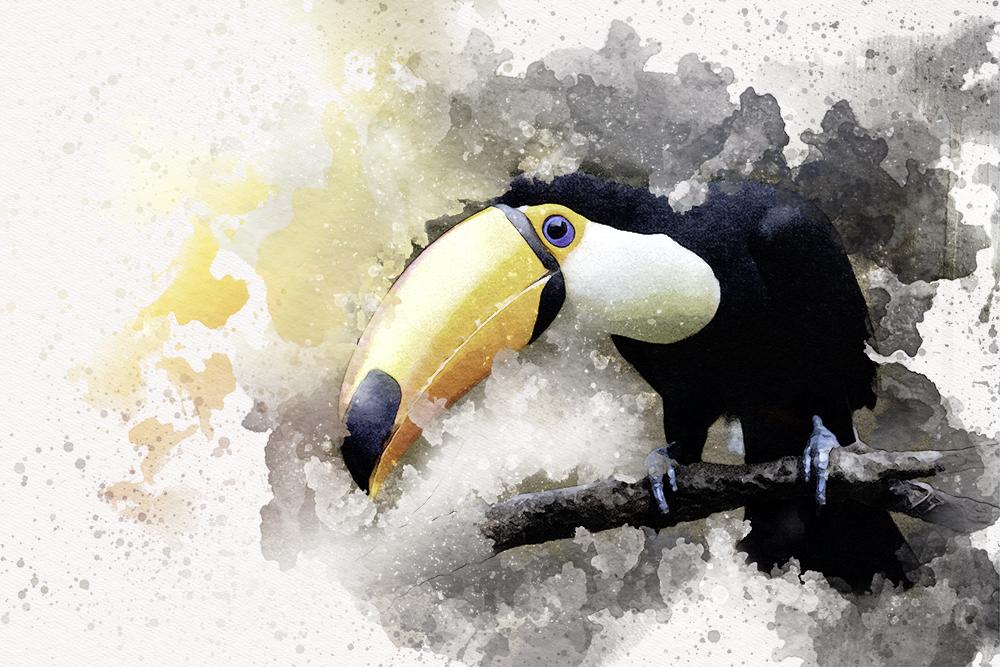 Reuzentoekan - Toco toucan (Avifauna 2017)
