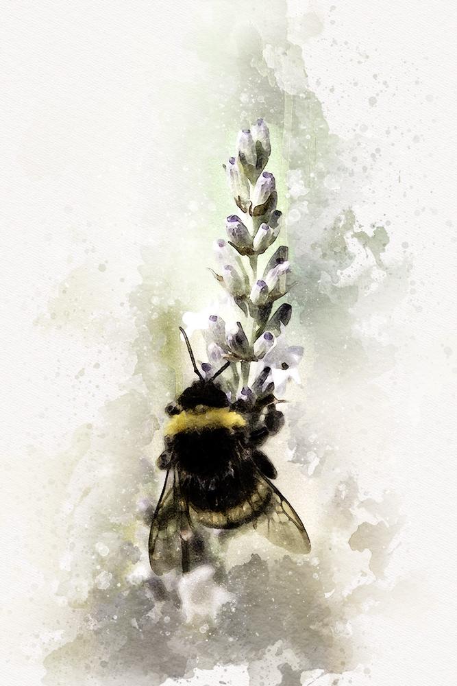 Hommel - Bumblebee (Raalte 2015)