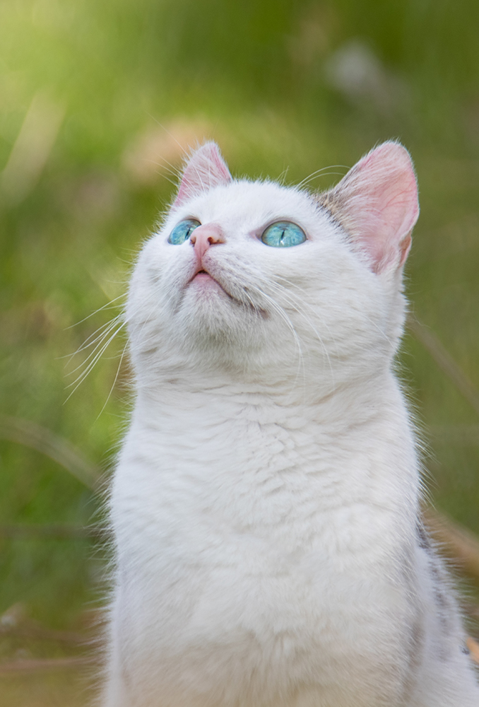 Kat - Cat