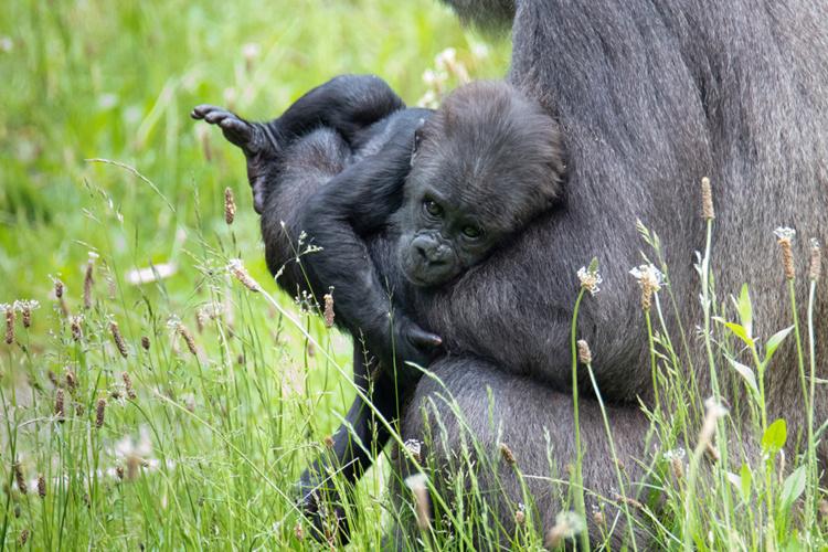 Gyasi en baby Kiango